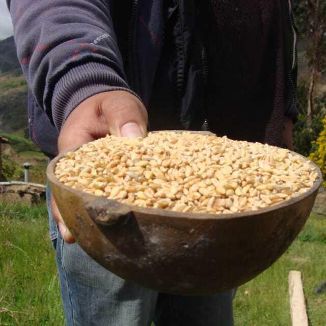 Bowl nuts